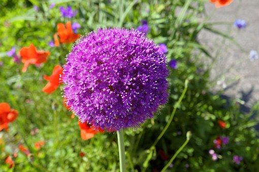 Blossom, Bloom, Purple, Purple Flower, Flower, Nature