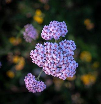 Bud, Bloom, Flowers, Spring, Tender, Nature