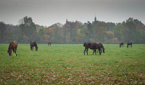 Stud, Horses, Meadow, Catwalk, Grass, Pasture Land