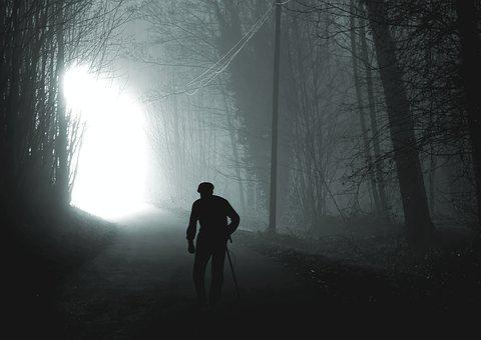 Mati, Light, The Rays, Night, Tree, Forest, Evening
