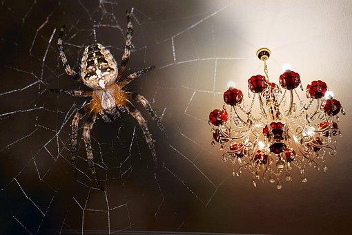 Spider, Chandelier, Macro, Lamp, Mystic, Evening