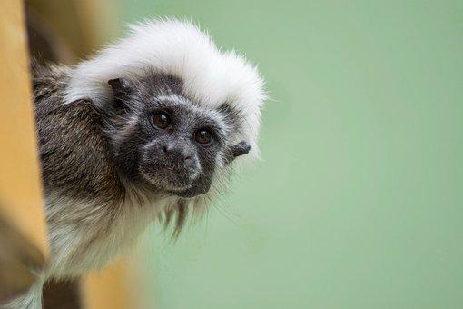 Monkey, Zoo, Animal, Sitting Monkey, Cute, Nature