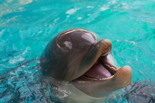 Dolphin, Water, Sea World, Ocean, Marine, Animal