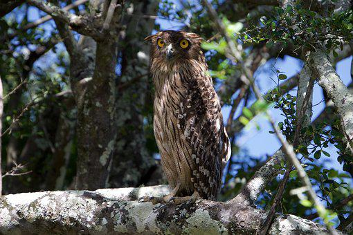 Owl, Some Of The Specials, Bird Of Prey, Nature, Owls