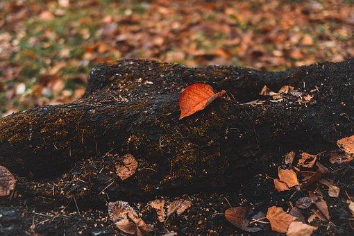 Tree, Sheet, Park, Leaves, Trees, Nature, Autumn