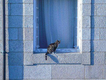 Cat, Window Sill, Pet, Cute, Fluffy, Sunny, Windowsill