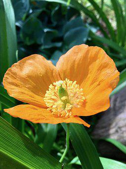 Plant, Yellow, Flower, Green, Leaves, Pedicel, Sepal