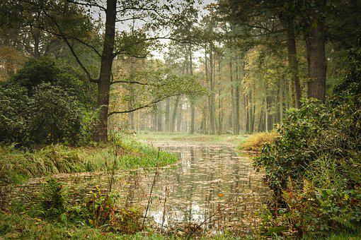 Park, Pond, Tree, Green, Romantic, The Taj, Lake