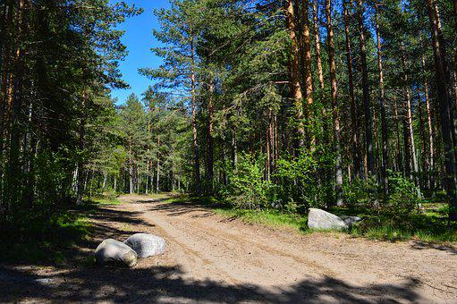 Forest, Road, Pine, Stones
