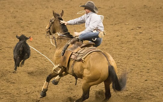 Rodeo, Horse, Competition, Rope
