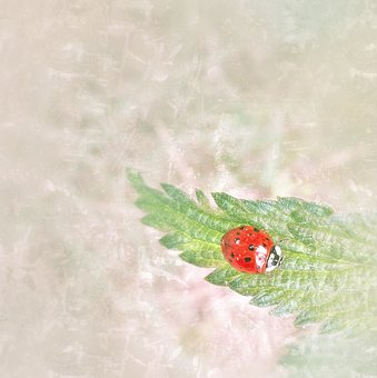 Ladybug, Brennessel, Small, Simply, Hell