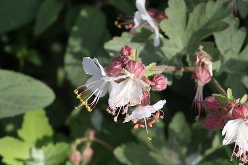 Tar, Flowers, Field, White, Grass, Pistil, Stamen