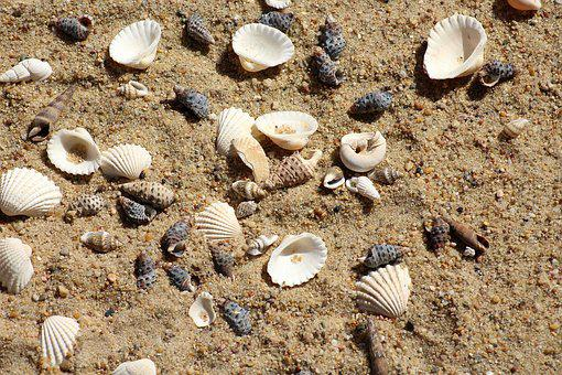 Shells, Sand, Beach, Rest, Summer, Holidays, The Sun
