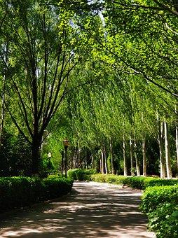 Natural, Trees, Trail, Shade