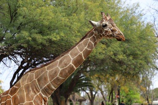 Reid Park, Zoo, Tucson Az