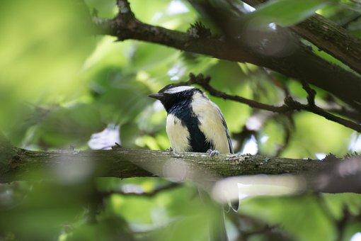 Bird, Tree, Feather, Animal, Nature, Macro, Close