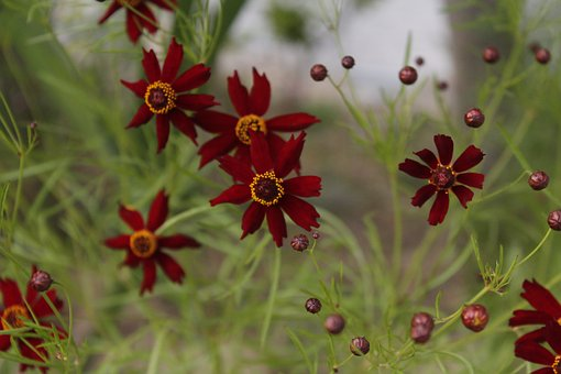 Red Flowers, Flowers, Autumn, Nature, Plants, Spring