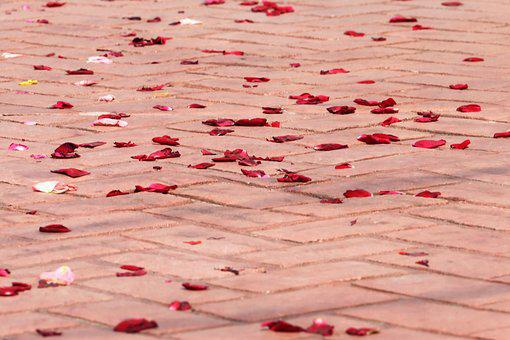 Corpus Christi Feast, Rose Petals On The Floor