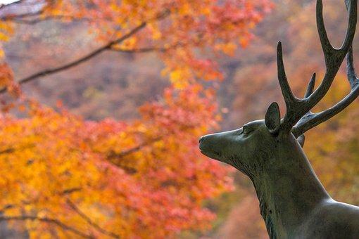 Deer, Autumnal Leaves, Maple, Red, Huang, Japan