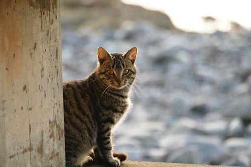 Cat, Sunset, Animal, Kitten, Evening Light, Cat's Eyes