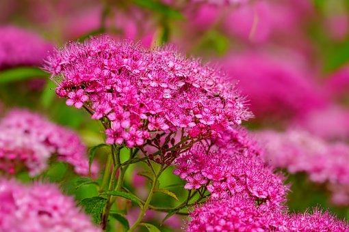 Nature, Perennials Greenhouse, Flora, Flowers, Pink