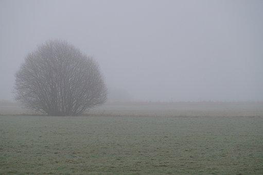 Fog, Nature, Landscape, Mood, Tree, Morgenstimmung