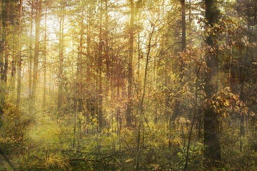 Spring, Forest, Light, Landscape, View, Rest, Nature