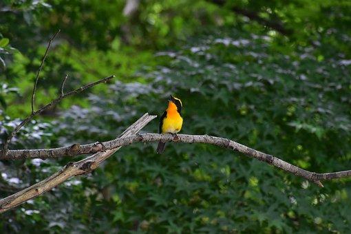 Animal, Fresh Green, Wood, Sunbeams, Bird, Wild Birds