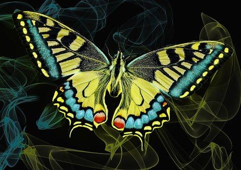 Butterfly, Neon, Glow, Light, Glowing, Effect, Black