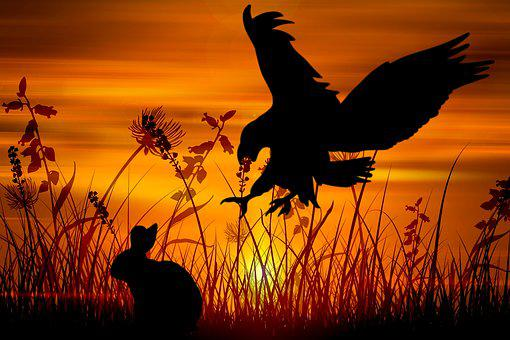 Eagle, Rabbit, Hunt, Wildlife, Hunting, Hunter