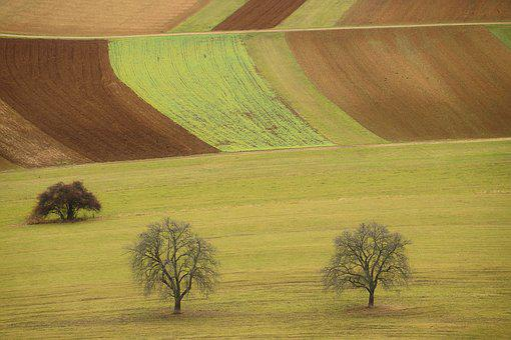 Landscape, Fields, Nature, Arable, Agriculture, Tree