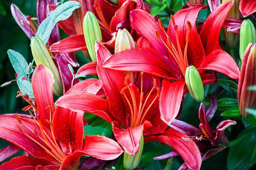 Flowers, Red, Nectar, Green, Leafs