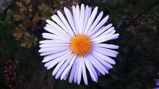Flower, Bright, Circle, Flowers, Nature, Macro