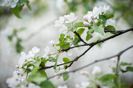 Spring, White Flowers, May, Bloom, Flower, Flowers