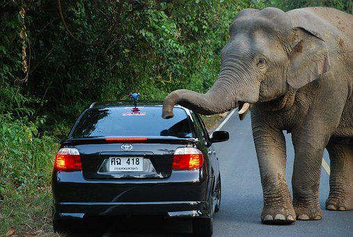 Elephant, Auto, Rainforest, Thailand, National Park