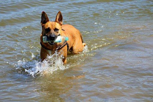 Dog, Fun, Water, Water Toy, Bath, Friend, Nature