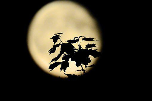 The Leaves On The Background Of The Moon, Night