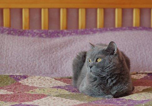 Cat, Feline, Domestic, Pet, Cute, Animal, Fur, Portrait