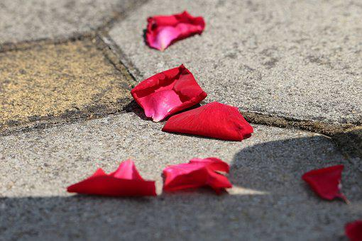 Corpus Christi Feast, Red Rose Petals On The Floor