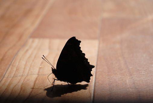 Butterfly, Silhouette, Insect, Closeup, Macro, Insects