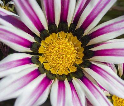 Flower, White Flower, White Petals, Small Flower