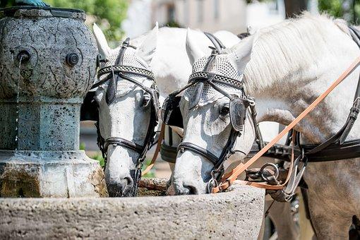 Baden Baden, City, Horse, Drink, Residenzstadt, Spring