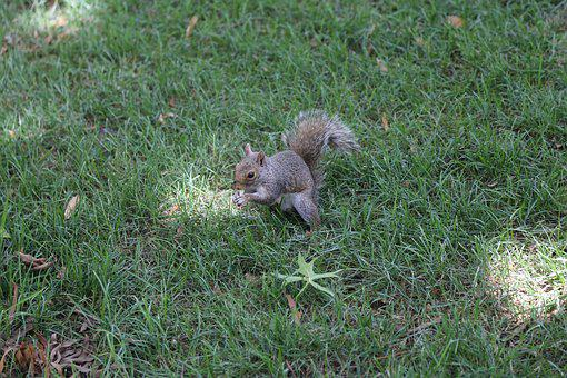 Squirrel, Nature, Wildlife, Rodent, Animal, Cute