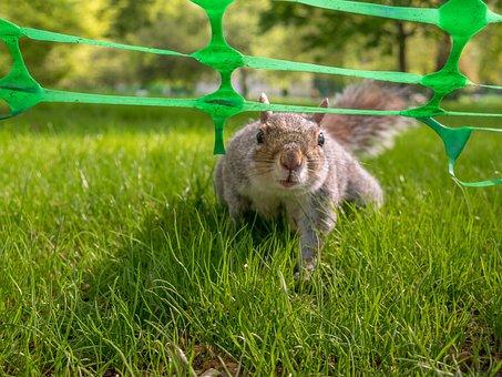 Squirrel, Animals, Grass, Possierlich, Nature, Garden