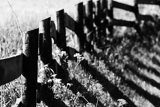 Fence, Field, Nature, Meadow, Summer, Outdoor