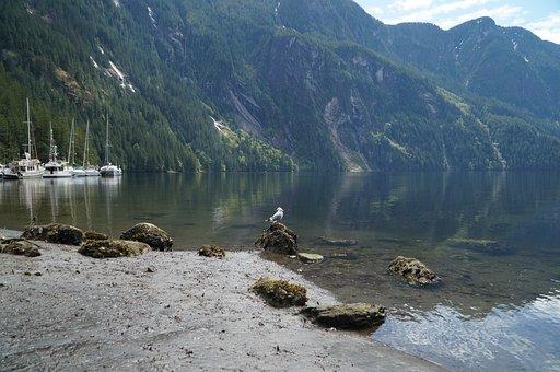 Shore, Ocean, Fjord, British Columbia, Sea, Travel