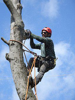 Lumberjack, Tree-service, Tree-trimming, Tree-worker