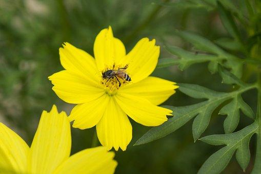 Natural, Yellow Flowers, Honey, United Soi Clones
