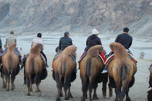 Hunder, Ladakh, Nubra, Vally, Valley, India, Mountain