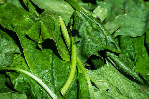 Spinach, Leaf Spinach, Vegetables, Leaves, Frisch